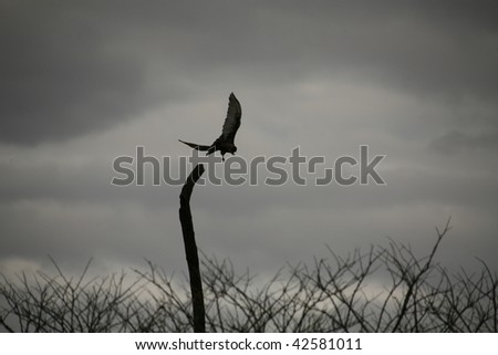 Bird of prey in Kenya