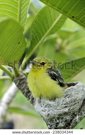 bird on a branch,animal, bird, branch, canary, claws, colorful, colourful, conservation, creature, eyes, natural, nature, perch, perched, vantage, wild, wilderness, wings, yellow,thai