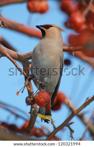 Bird on a branch in an apple orchard - stock photo