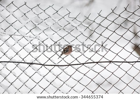 bird on a chain-link fence snowy winter #344655374