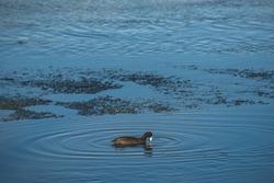 Bird on a Estuary,