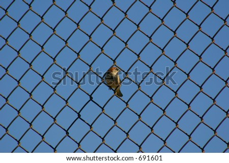 Bird on a Wire Fence #691601