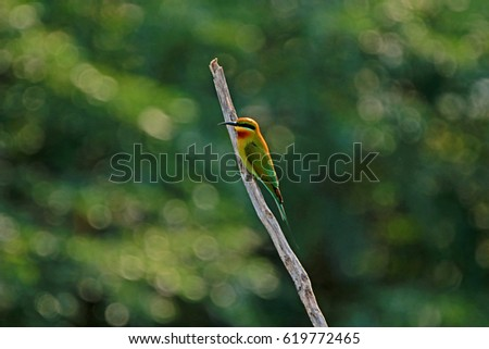 Bird on branch in nature #619772465