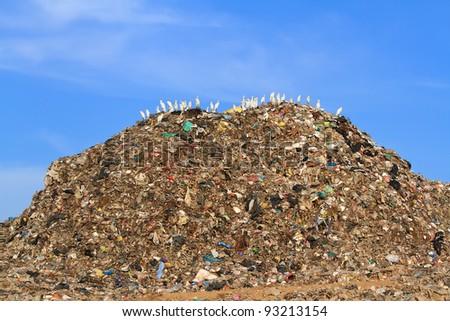 Bird on mountain of garbage
