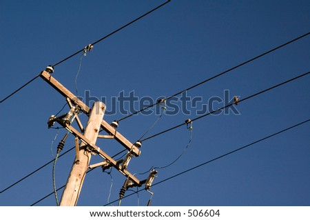 Bird on one of four powerlines