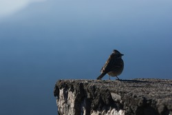bird on stone to start fligth over the mountains