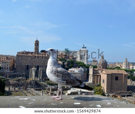 Bird on the background of the ancient ruins of ancient Rome