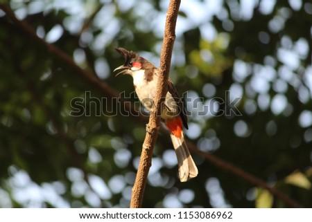Bird on the branch #1153086962