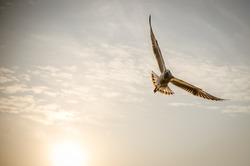 Bird on the sky