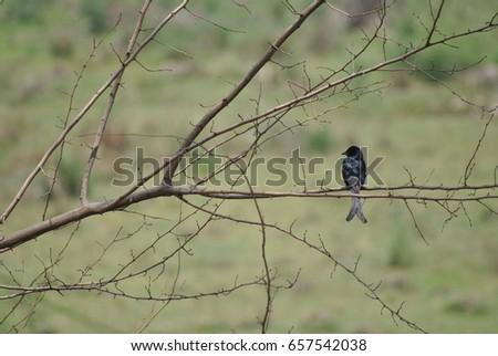 Bird on Twig #657542038