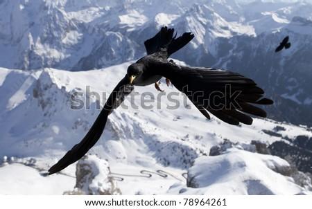 Bird over Dolomite mountains