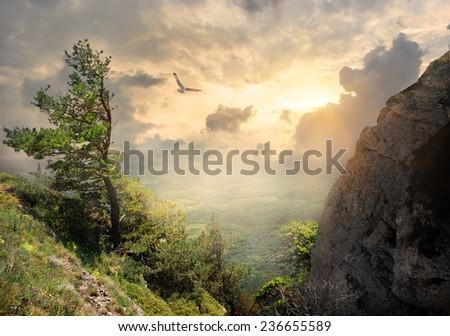 Bird over the big tree on mountain