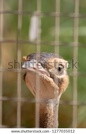 Bird peers through wired cage fence looking for a way out. #1277035012