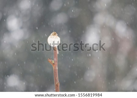 Bird perched on a stick under the snowfall in winter. #1556819984