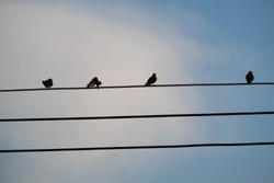 Bird perched on electric cable on blue sky background