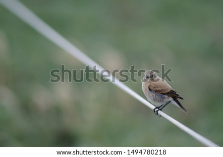 Bird perched on rope. Otway Sound and Penguin Reserve. Magallanes Province. Magallanes and Chilean Antarctic Region. Chile.
