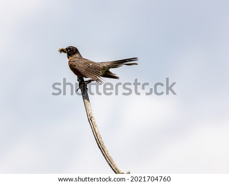 Bird perched on tree at Ernest L. Oros Park Foto stock ©