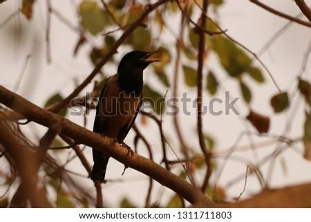 Bird Photography Pics