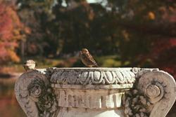 bird posing on top of a sculpture