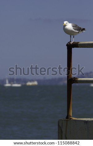 Bird resting in the San Francisco Bay. Shoot with Canon 5DM3