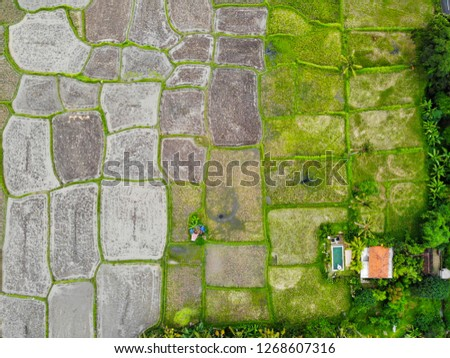 bird's-eye view of terraced rice paddy fields in various stages of growth in a gradient from right to left