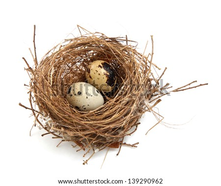 bird's nest and eggs
