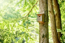 Bird's nest, nest box, fresh-green forest