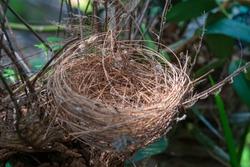 Bird's nest on a branch