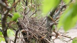 bird's nest on a tree, spring time