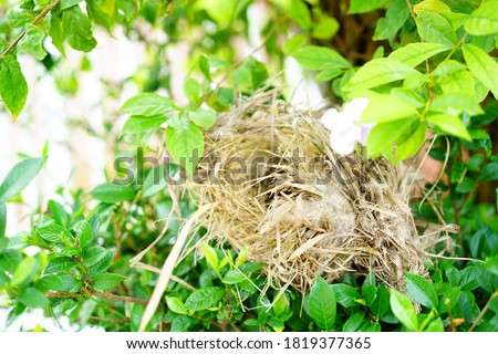 Bird's nest under the tree.Made of brown straw.bird's nest hanging on a tree in a natural garden,home sweet home,the father and mother created for laying eggs,Bird's nest is beautiful and durable. stock photo