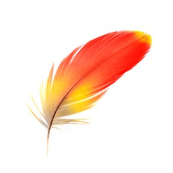 Bird, Scarlet Macaw feathers