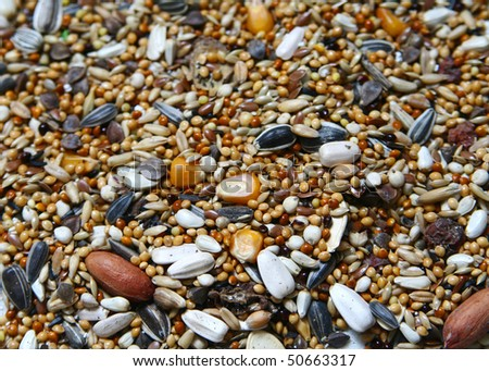 Bird seed and nuts