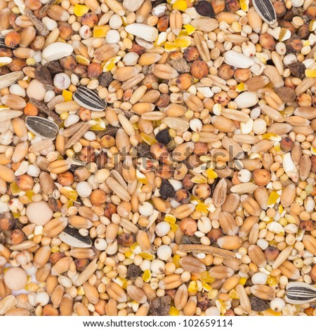 Bird seed for pigeons background texture