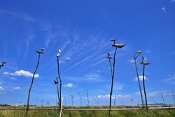 Bird shaped sculptures of wood
