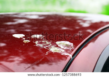 bird shit, drop of bird stain on red car surface, dirty waste of birds dropping splatter, dirty stain bird shit close-up, drop of bird poop splattered (selective focus)