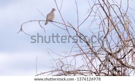 Bird sitting in a tree looking around to see what there is to see