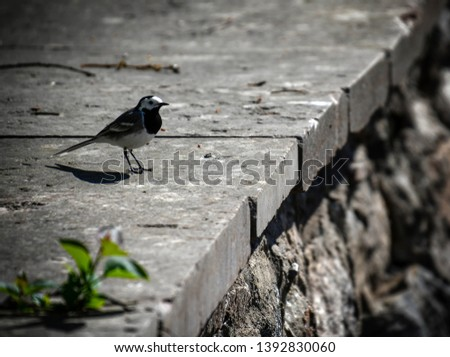 Bird sitting in park on stonewall