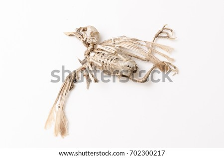 Bird skeleton #702300217