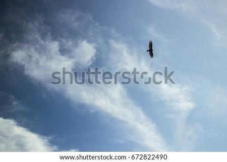 Bird Soaring High #672822490