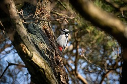 bird spotted woodpecker on tree branch