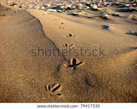 Bird steps in sand with sea shells in background