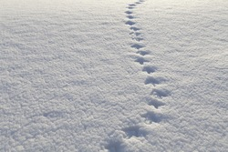 bird steps on the snow