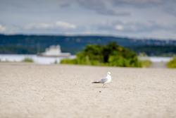 Bird walking on the sand