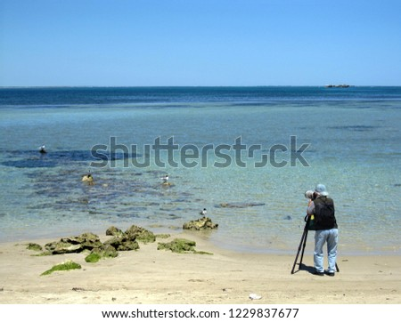 Bird watching and taking pictures in Penguin island's beach, western Australia