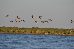 Bird watching in the Danube Delta Biosphere Reserve. The Bird's Island on the Romanian and Ucrainian border.