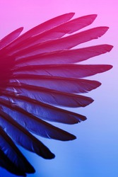 bird wing closeup, abstract neon light