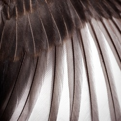 bird wing feather texture abstract background