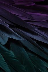 Bird wing feathers detail, closeup dark background