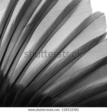 bird wing pattern feather texture