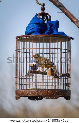 birdcage hanged at a park in Beijing
